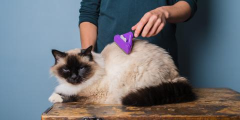 Which Pet Grooming Tasks Should Be Left to the Experts?, Lincoln, Nebraska