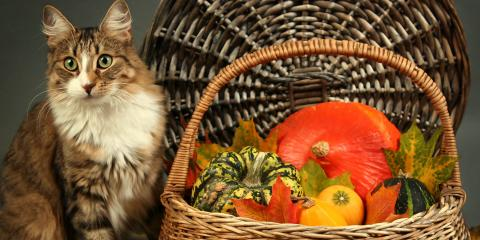 4 Animal Care Tips to Embrace on Thanksgiving, Lincoln, Nebraska