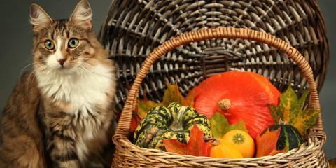 4 Animal Care Tips to Embrace on Thanksgiving, Lincoln, Nebraska