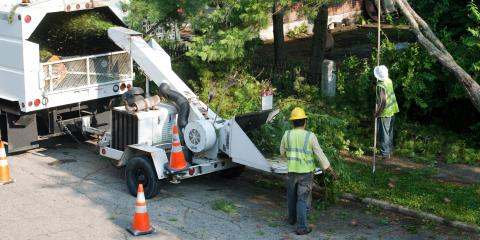 What Can an Arborist Do for Your Yard?, Anchorage, Alaska