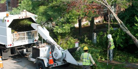 3 Reasons to Have Your Trees Regularly Trimmed, Ewa, Hawaii