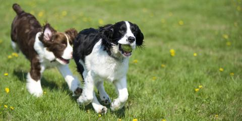 3 Reasons to Enroll Your Dog in Playcare, McKinney, Texas