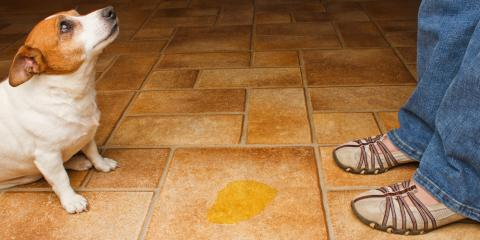 4 Ideal Flooring Installation Options for Homes With Pets, Boynton Beach, Florida