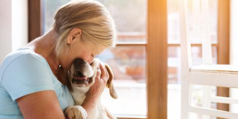 Veterinarian Explains 4 Common Health Problems in Senior Cats & Dogs , Apple Valley, Minnesota