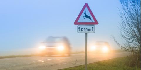 A Simple Guide to Avoiding Wildlife on the Road, Dayton, Ohio