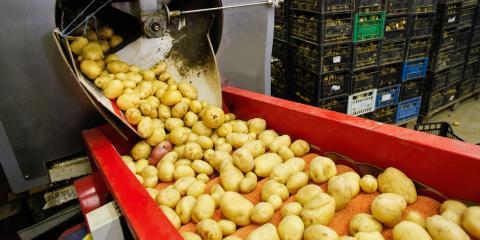 How to Minimize Allergen Cross-Contamination in Food Processing, Delavan, Wisconsin