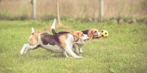 3 Ways Doggie Day Care Helps Improve Pet Behavior , Nicholasville, Kentucky