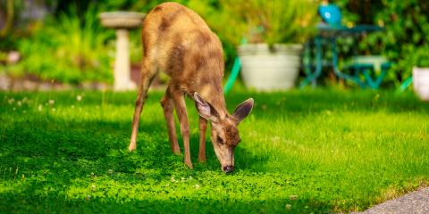 How to Protect Your Garden From Animals , New Milford, Connecticut