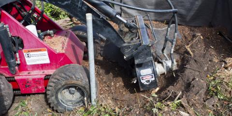 Honolulu Tree Removal Experts Explain What You Need to Know About Stump Grinding, Honolulu, Hawaii