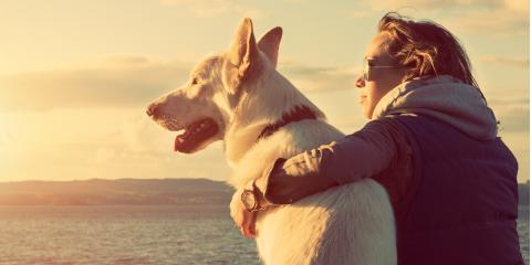 4 Ways to Ensure Comfort During End of Life Pet Care, Atlanta, Georgia