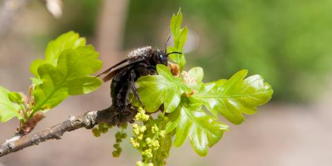 4 FAQs about Carpenter Bees, Versailles, Kentucky