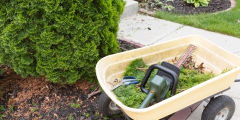 Power Tools Experts Explain How to Choose a Hedge Trimmer, Pell City, Alabama