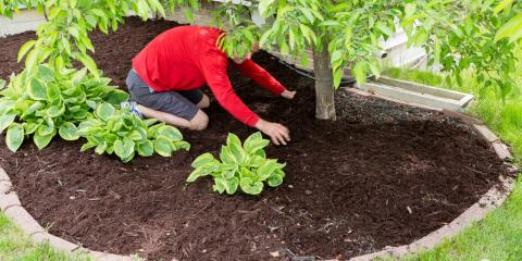 3 Popular Mulch Choices for Your Home , Manchester, Connecticut