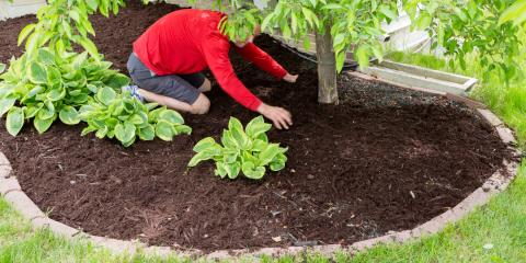 Benefits of Using Mulch in Landscaping, Ludlow, Kentucky