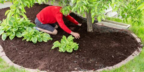 3 Tips to Care for Newly Planted Trees, Midland City, Alabama