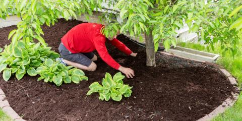 What's the Difference Between Topsoil & Mulch?, Hamilton, Ohio