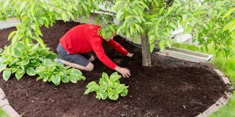 How to Choose the Best Mulch for Your Garden, Northfield Center, Ohio