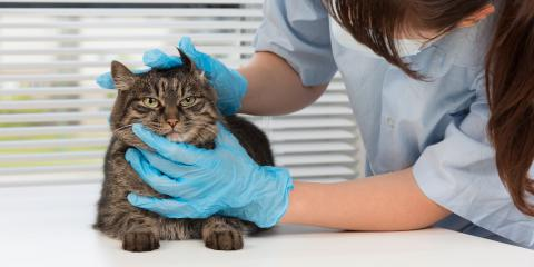 Why You Should Only Get Medications From Your Veterinarian, Foley, Alabama