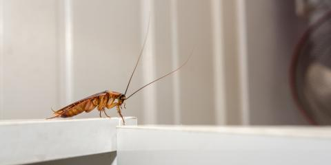 4 Surprising Things You Probably Didn't Know About Cockroaches, Englewood, Ohio