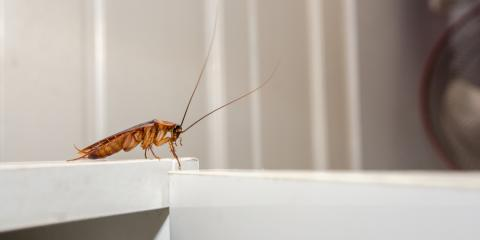 5 Reasons to Let Pest Control Professionals Handle a Cockroach Infestation, Lexington-Fayette, Kentucky