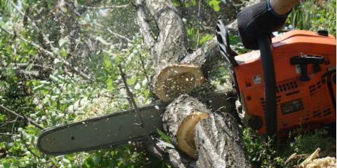 Why You Should Only Hire Fully-Insured Tree Services, Moody, Alabama