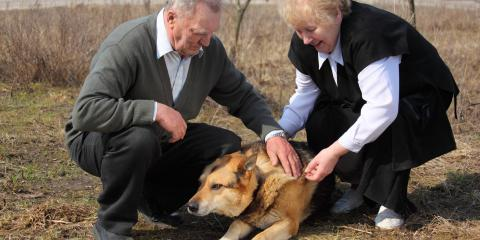 How to Reduce Back Pain When Taking Care of a Dog, Crystal, Minnesota