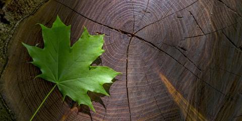 Broken Arrow Tree Service Explains Benefits of Stump Removal, Broken Arrow, Oklahoma