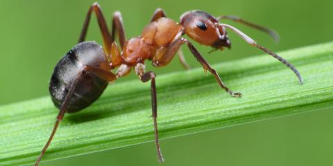 What's the Difference Between Carpenter Ants & Termites?, Newport, Ohio