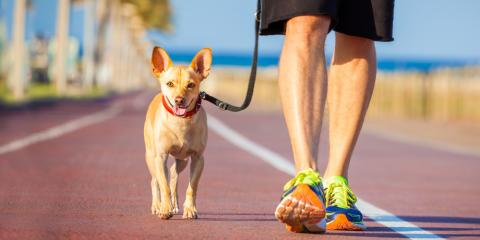 What You Should Know About Asphalt & Your Dog, Cranston, Rhode Island