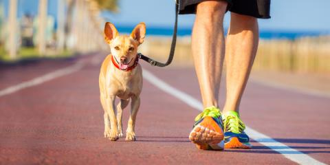 How You Can Apply Dog Training Skills in Everyday Life, Milford, Connecticut