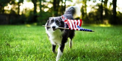 4 Ways to Keep Your Dog Safe on July 4th, Lincoln, Nebraska