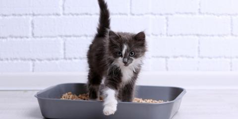 3 Plumbing Tips for New Pet Owners, Grand Rapids, Wisconsin