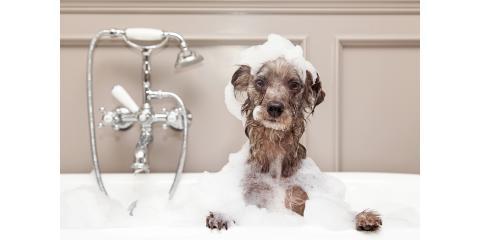 Free Bath with Boarding, Sanford, North Carolina