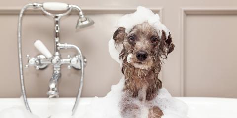 Own a Pet? 4 Helpful Plumbing Tips to Keep in Mind, Soldotna, Alaska