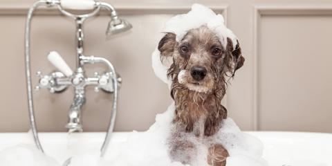 5 Tips for Finding the Perfect Dog Groomer, Nicholasville, Kentucky