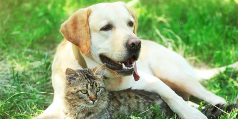 How Long Do Dogs & Cats Live?, Koolaupoko, Hawaii