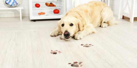 4 Useful Tips for a Pet-Friendly Mudroom, Covington, Kentucky