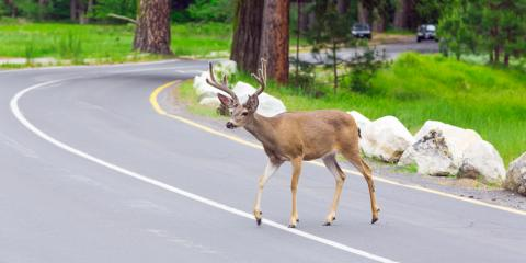 Sharing the Road With Animals & Avoiding Collision Work, Springfield, Ohio