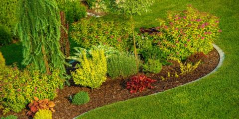 5 Best Trees & Shrubs for Your Landscaping, Plymouth, Minnesota