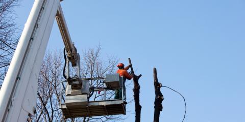 3 Ways to Tell If You Need Tree Removal, Hawaii County, Hawaii