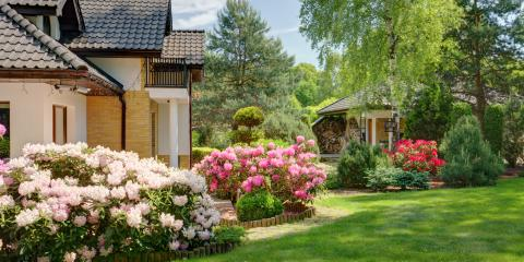 Tree & Shrub Care: How Healthy Trees Increase Property Value, Owings Mills, Maryland