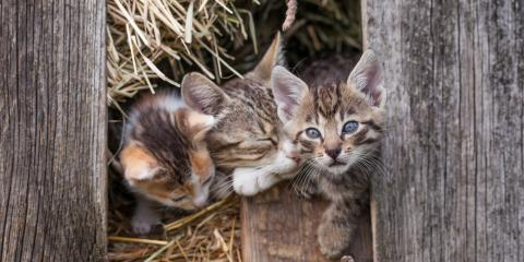 How Your Metal Barn Could Benefit From a Cat, Union, Ohio