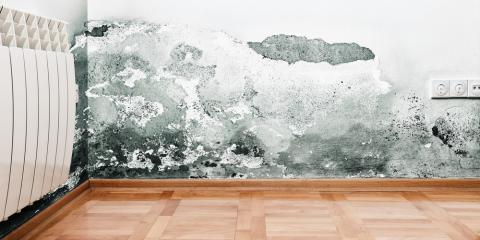4 Mold & Mildew Solutions for a Safer Home, Tifton, Georgia