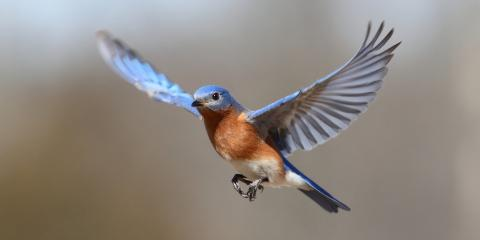 4 Ways to Keep Birds From Flying Into Your Windows, Spring Valley, New York