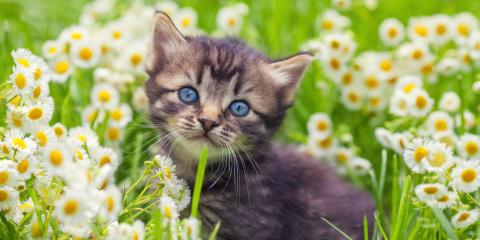 What You Need to Know About Bringing Home a Kitten, Fairfield, Ohio