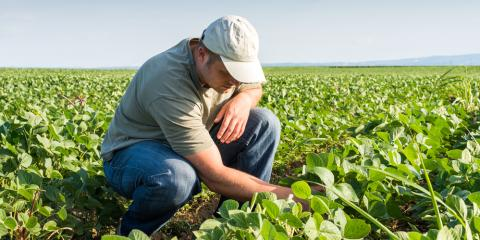 How Crop Insurance Protects Farmers From Uncertainty, Beatrice, Nebraska