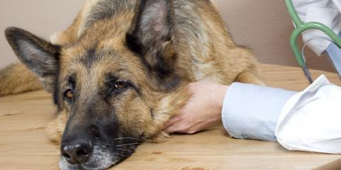 The Difference Between Kennel Cough & Canine Flu, Sycamore, Ohio