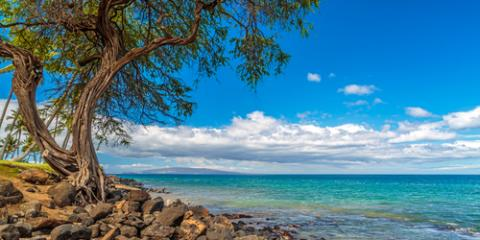 What You Need to Know About Condo Rentals at Maui Banyan Resort , Kihei, Hawaii