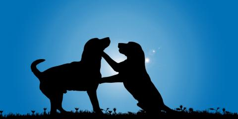 3 Tips to Help You Choose a Great Dog Day Care, Shawano, Wisconsin