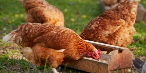 A Quick Guide to Animal Feed, ,